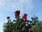 Florablog-Roseto-Botanico-Carla-Fineschi-88.jpg