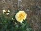 Florablog-Roseto-Botanico-Carla-Fineschi-89.jpg