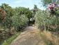 Florablog-Roseto-Botanico-Carla-Fineschi-90.jpg