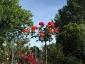 Florablog-Roseto-Botanico-Carla-Fineschi-91.jpg