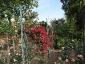 Florablog-Roseto-Botanico-Carla-Fineschi-92.jpg