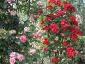 Florablog-Roseto-Botanico-Carla-Fineschi-93.jpg