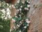 Florablog-Roseto-Botanico-Carla-Fineschi-96.jpg