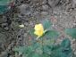 florablog-roseto-botanico-carla-fineschi-98.jpg