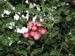 florablog-roseto-botanico-carla-fineschi-99.jpg