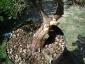 ho selezionato le vene linfatiche sul tronco