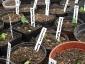 semenzaio-semina-2010-05