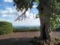 Il panorama dall\'albero monumentale