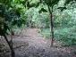 01-piante-di-cacao.jpg
