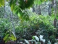 02-pianta-di-cacao-piccola.jpg