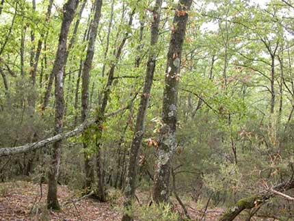 Gli alberi: piantiamoli, ci aiuteranno