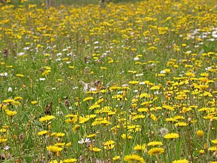 I fiori in città, profumo in pericolo. E non solo…