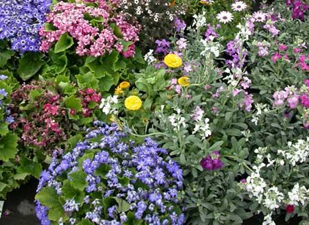 La Flora in Mostra
