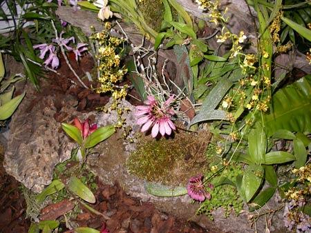 Orchidee, se le conosci le coltivi meglio