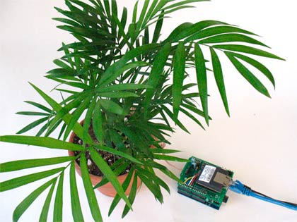 Botanicalls Twitter kit, se la pianta ha sete ti telefona!