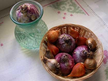 giacinto-hyacinth