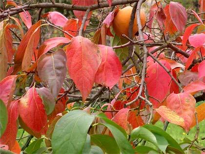 Perchè le foglie cambiano colore?