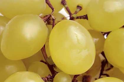 Uva: presenti in media 6,6 residui chimici per campione