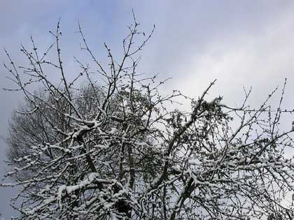 Arriva il Generale Inverno, proteggiamo le nostre piante