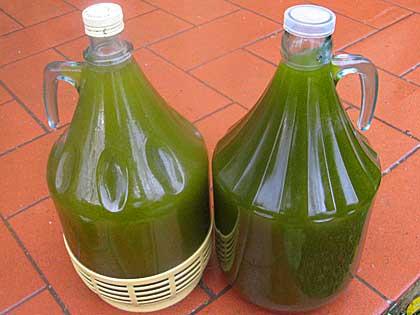 Olio d\'oliva estratto a freddo, cerchiamo di capirci qualcosa