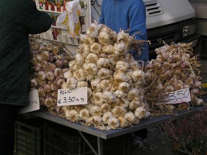 aglio-allium-sativum-garlic