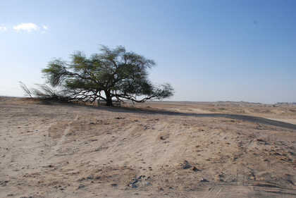 L\'Albero della Vita, tree of life