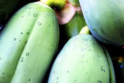 Papaya, naturale o fermentata, per una migliore qualità della vita
