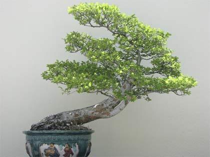 Marzo, prepariamo i bonsai al risveglio