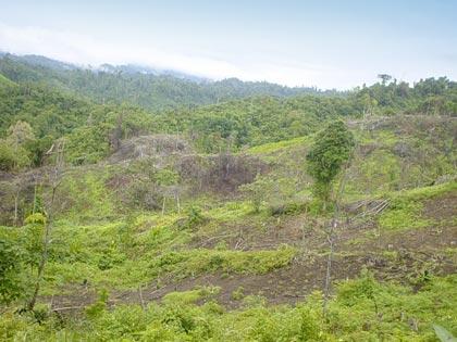 Amazzonia disboscata