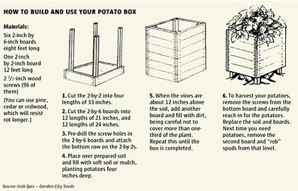Produrra 40 kg di patate in mezzo metro quadrato