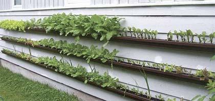 Coltivare ortaggi in Alaska con un giardino verticale fai-da-te