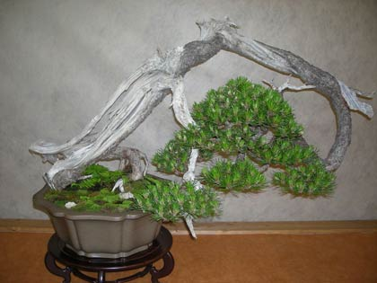 Arcobonsai e arcofiori 2009 un giorno tra bonsai piante for Piante per bonsai