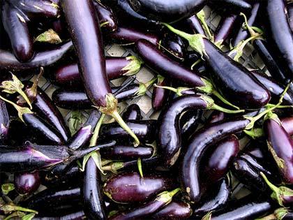 solanum-melongena-melanzana-eggplant
