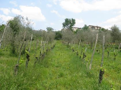 Due allegri viticoltori allo sbaraglio – Ultima puntata