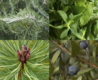 Unguento bio-aromatico alle mediterranee