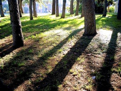 Misurare il respiro del bosco