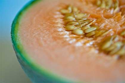 melone-cucumis-melo