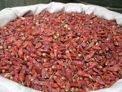 Antiparassitari naturali, il peperoncino efficace contro gli afidi