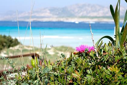 spiaggia-stintino