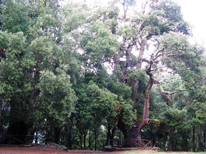 foresta-primaria-montes