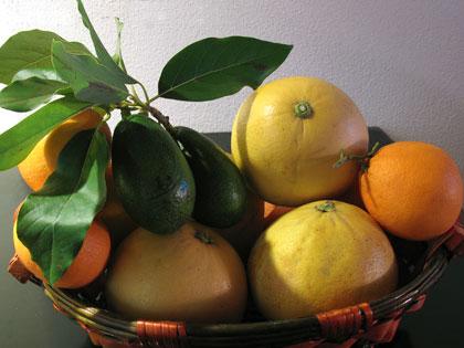avocadi-arance-pomeli