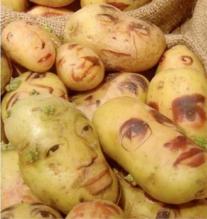 patata-ogm