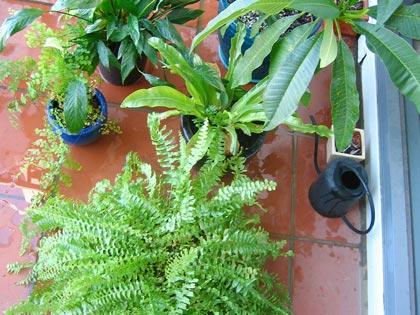 Primavera un trattamento rigenerante per le piante da - Piante fiorite da appartamento ...