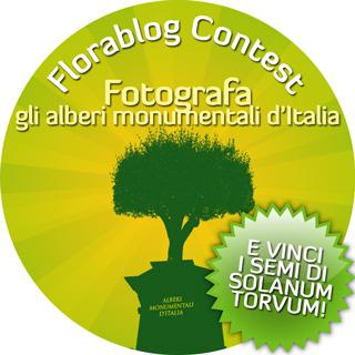 Primo Florablog Contest: fotografa gli alberi monumentali e vinci i semi di Solanum torvum