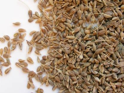 Masticare semi di anice favorisce la digestione e profuma l'alito