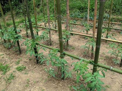 Pali per pomodori in plastica for Corteccia bricoman
