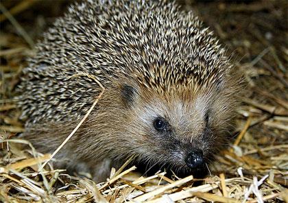 Animali utili nell'orto e in giardino