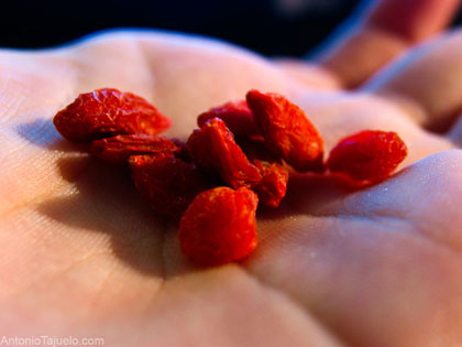 Bacche di Goji (Lycium barbarum) - Foto di Antonio Tajuelo - Flickr