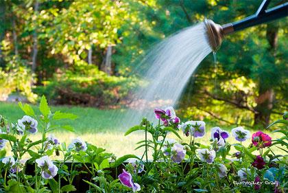 10 consigli per ottimizzare il consumo di acqua in giardino, nell'orto e sul balcone