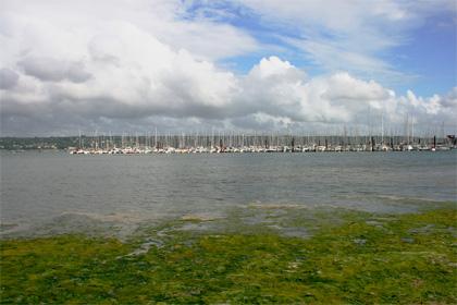 Nuova invasione di alghe in Bretagna, sott'accusa agricoltura e allevamenti intensivi